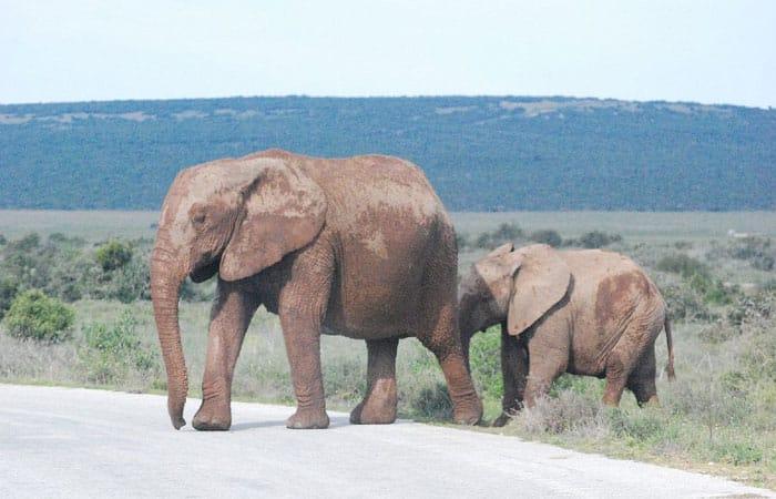 vrijwilligerswerk_Zuid_Afrika_Afrika