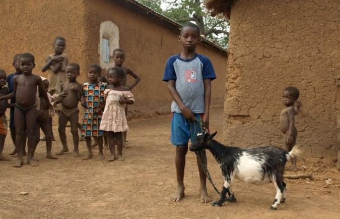 Dierenarts in Ghana