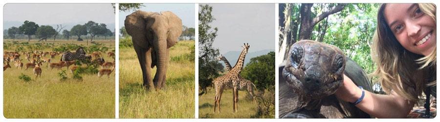 jongerenreis in Afrika