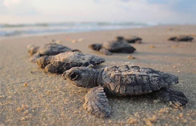 Combinatie project schildpadden en educatie programma